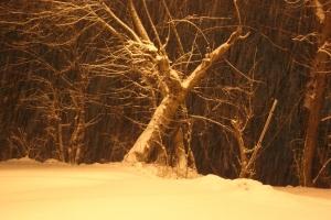 Morning Snow, Tamaqua, 1-18-2014 (1)