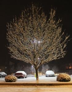 Snow Covered Trees, Tamaqua, 1-18-2014 (1)