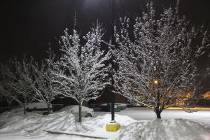Snow Covered Trees, Tamaqua, 1-18-2014 (2)