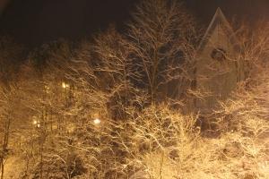 Snow Covered Trees, Tamaqua, 1-18-2014 (3)