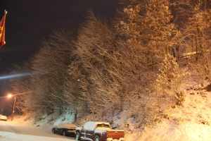 Snow Covered Trees, Tamaqua, 1-18-2014 (4)
