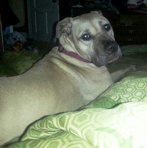 Missing Dog, Greenwood Ave, Tamaqua, 6-24-2014 - Copy