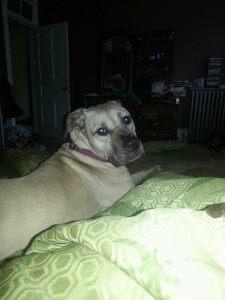Missing Dog, Greenwood Ave, Tamaqua, 6-24-2014