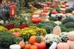 Pumpkins, Dunn's Farm, South Tamaqua, 9-20-2014 (1)