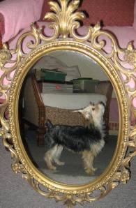 Missing Dog, Iris, Wendy Dunkelberger, Mauch Chunk Street, Tamaqua, 10-28-2014 (3)