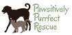 Pawsitively Purrfect Rescue LOGO