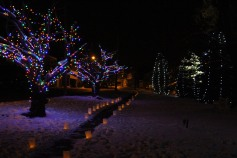 Tree Lighting, Santa, Lansford Alive, Kennedy Park, Lansford, 11-29-2014 (120)