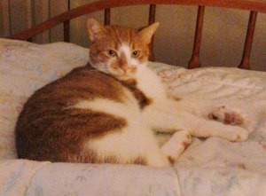 3-25-2015, Missing Cat, Lafayette Street, Tamaqua