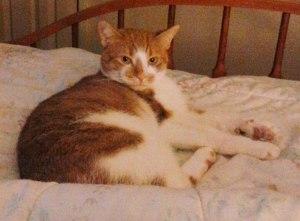 3-25-2015, Missing Cat, Lafayette Street, Tamaqua