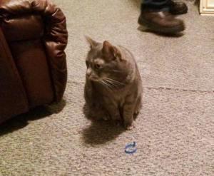 Missing Cat, Hunter Street, Tamaqua, 5-30-2015 (3)