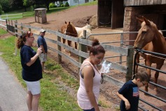 Open House, Horses and Horizons Therapeutic Learning Center, West Penn Township, 6-7-2015 (23)