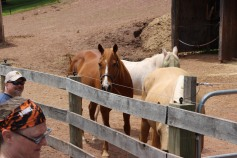 Open House, Horses and Horizons Therapeutic Learning Center, West Penn Township, 6-7-2015 (24)