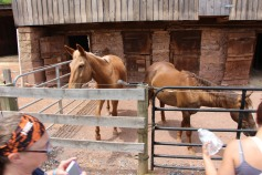 Open House, Horses and Horizons Therapeutic Learning Center, West Penn Township, 6-7-2015 (25)