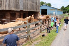 Open House, Horses and Horizons Therapeutic Learning Center, West Penn Township, 6-7-2015 (28)