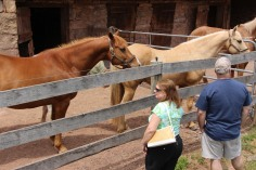 Open House, Horses and Horizons Therapeutic Learning Center, West Penn Township, 6-7-2015 (29)