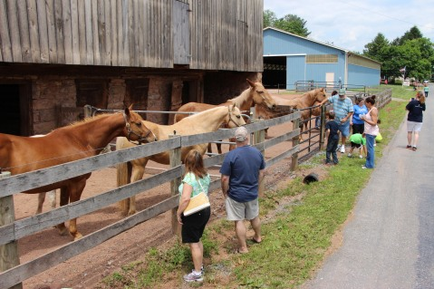 Open House, Horses and Horizons Therapeutic Learning Center, West Penn Township, 6-7-2015 (30)