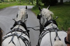 Open House, Horses and Horizons Therapeutic Learning Center, West Penn Township, 6-7-2015 (33)