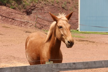 Open House, Horses and Horizons Therapeutic Learning Center, West Penn Township, 6-7-2015 (43)