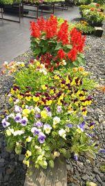 Season Grand Opening, Lansford Community Garden, Lansford, 6-13-2015 (111)