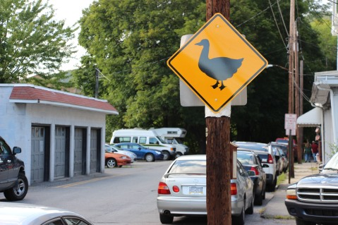 Duck Warning, Crossing Signs Placed, 8-Year-Old Boy, Schuylkill Avenue, Tamaqua, 8-7-2015 (58)