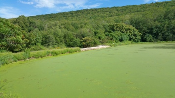Green Algae, Rabbit Run Reservoir, Tamaqua, Walker Township, 8-23-2015 (11)