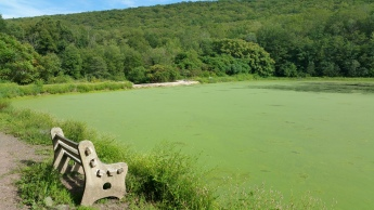 Green Algae, Rabbit Run Reservoir, Tamaqua, Walker Township, 8-23-2015 (13)