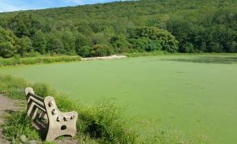 Green Algae, Rabbit Run Reservoir, Tamaqua, Walker Township, 8-23-2015 (13)