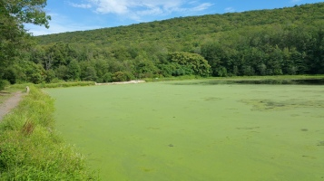 Green Algae, Rabbit Run Reservoir, Tamaqua, Walker Township, 8-23-2015 (15)