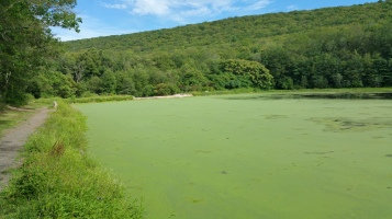 Green Algae, Rabbit Run Reservoir, Tamaqua, Walker Township, 8-23-2015 (18)