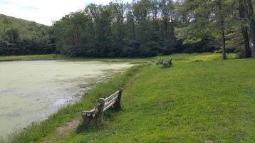 Green Algae, Rabbit Run Reservoir, Tamaqua, Walker Township, 8-23-2015 (21)