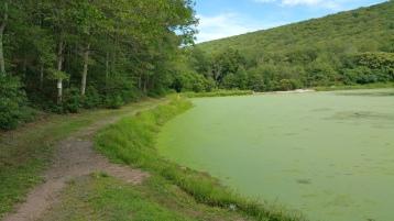 Green Algae, Rabbit Run Reservoir, Tamaqua, Walker Township, 8-23-2015 (26)