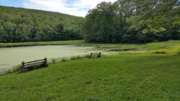 Green Algae, Rabbit Run Reservoir, Tamaqua, Walker Township, 8-23-2015 (27)