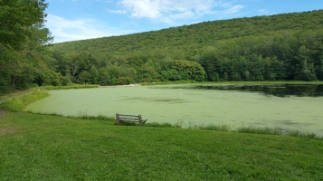 Green Algae, Rabbit Run Reservoir, Tamaqua, Walker Township, 8-23-2015 (29)
