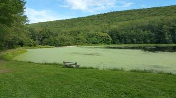 Green Algae, Rabbit Run Reservoir, Tamaqua, Walker Township, 8-23-2015 (29)