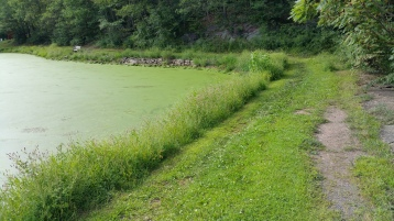 Green Algae, Rabbit Run Reservoir, Tamaqua, Walker Township, 8-23-2015 (5)