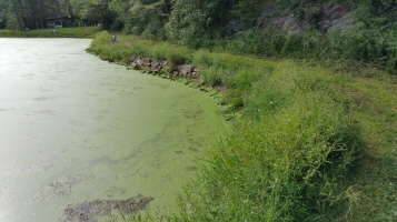 Green Algae, Rabbit Run Reservoir, Tamaqua, Walker Township, 8-23-2015 (8)
