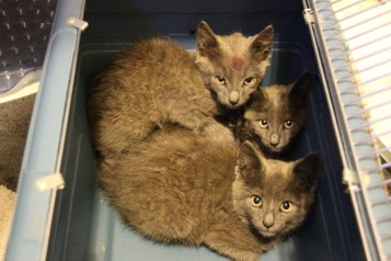 Kittens in Dumpster, Sisters Cantina, Tamaqua, 8-19-2015 (99)
