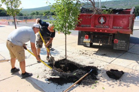 Lanscapers Replacing Trees in Front of Tamaqua High School, Tamaqua, 8-14-2015 (1)