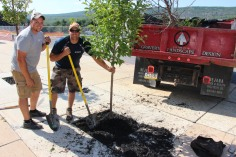 Lanscapers Replacing Trees in Front of Tamaqua High School, Tamaqua, 8-14-2015 (4)