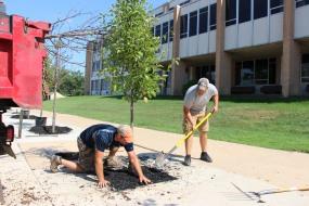 Lanscapers Replacing Trees in Front of Tamaqua High School, Tamaqua, 8-14-2015 (9)
