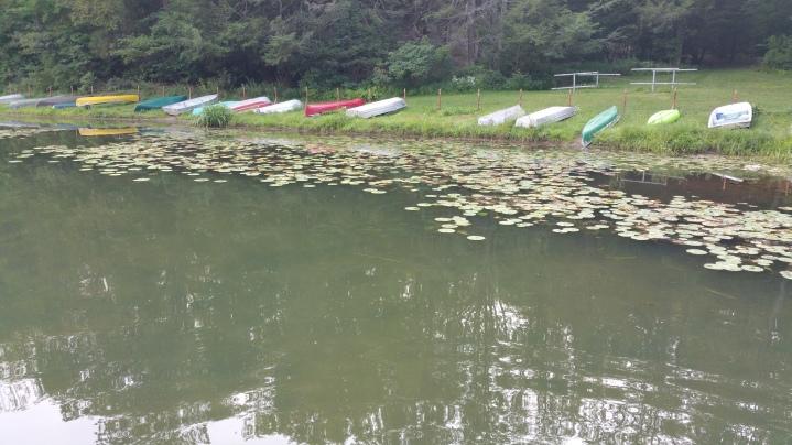 Lily Pads, Tuscarora State Park, Barnesville, 8-30-2015 (5)