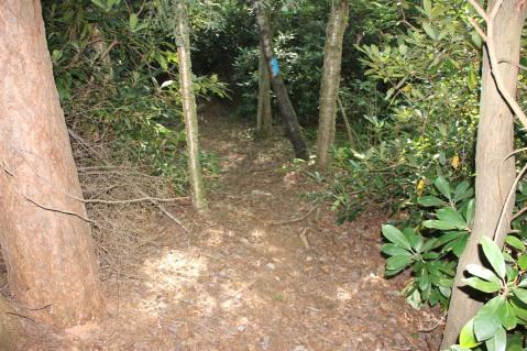 Making New Bicycle Trails, Owl Creek Reservoir, Tamaqua, 7-26-2015 (1)