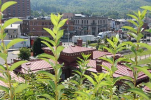 Photos with Scott Herring, around Tamaqua, 8-18-2015 (8)