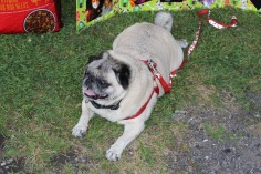 SPCA Donation Drive, Tamaqua Girl Scouts, North and Middle Ward Playground, Tamaqua, 8-13-2015 (20)