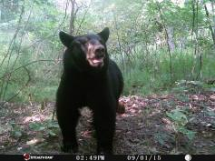 Trail Camera Photos, from Dennis Puls, Frackville, 9-16-2015 (14)