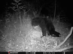Trail Camera Photos, from Dennis Puls, Frackville, 9-16-2015 (17)