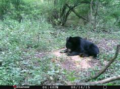 Trail Camera Photos, from Dennis Puls, Frackville, 9-16-2015 (19)