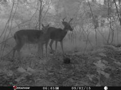Trail Camera Photos, from Dennis Puls, Frackville, 9-16-2015 (7)