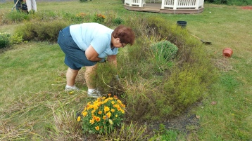 Pulling Weeds, Picking Up Garbage, Depot Square Park, Tamaqua, 9-19-2015 (2)