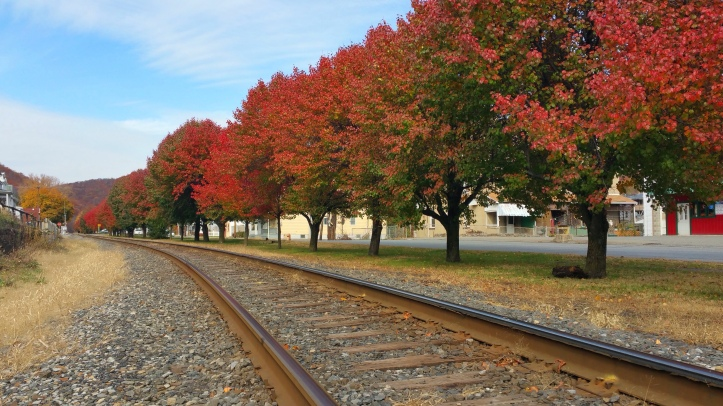 Red and Green Trees, North Railroad Street, Tamaqua, 10-31-2015 (2)